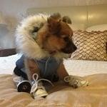 Fashion Friday: Hugo Puppy Dog's Spiffy Style