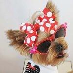 Fashion Friday: Chloe's Fashionista Diva Style