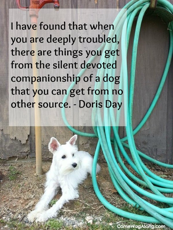 """I have found that when you are deeply troubled, there are things you get from the silent devoted companionship of a dog that you can get from no other source."" - Doris Day"
