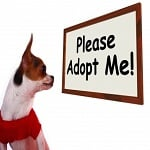 PetSmart Charities National Adoption Weekend