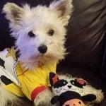 PetSmart's Spooktacular Pet Halloween Costume Review and Giveaway!
