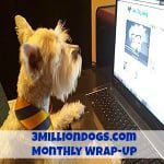 3MillionDogs.com Monthly Wrap-Up: A Dog's Letter to His Valentine & 5 Ways to be a Responsible Dog Owner