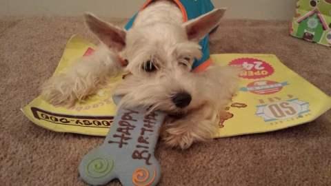 Simba Birthday - - Birthday Dog Treat - Yum