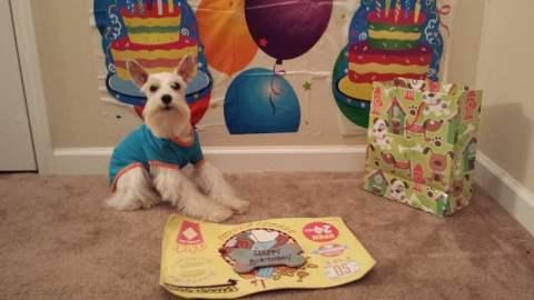 Simba Birthday - Happy 2nd Birthday - Yay