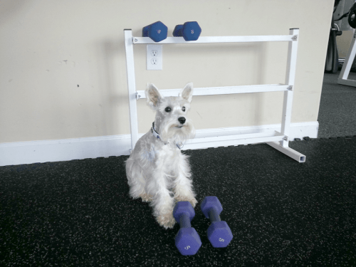 Dog work out