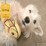 BlogPaws Blog Hop: Wordless Wednesday – Pridebites Dog Toys