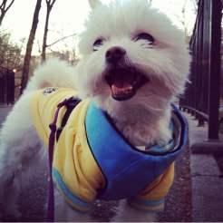 Little dog, big smile!