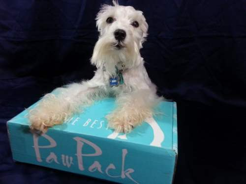 PawPack - Dog Subscription Box