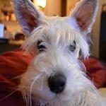 BlogPaws Blog Hop: Wordless Wednesday – Bunny Ears