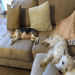 BlogPaws Blog Hop: Wordless Wednesday – Relaxin'