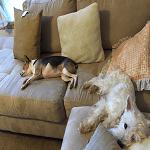 BlogPaws Blog Hop: Wordless Wednesday – Relaxin'