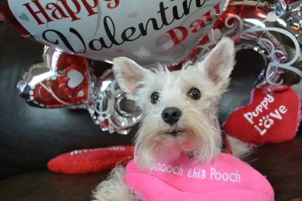 Be Mine? Happy Valentine's Day!