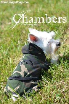 Theo Dog Fashion - Dog Hoodie and Pants