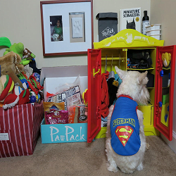 BlogPaws Blog Hop: Wordless Wednesday – Dog Closet