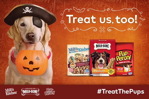 Treat The Pups Halloween Dog Ideas DIY