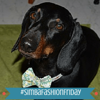 Fashion Friday: Walter the Doxie