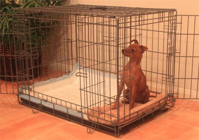 Potty Train Your Puppy With Apartment