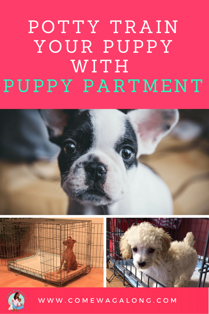 puppy apartment potty training