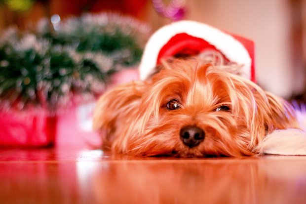 2016 Holiday Gift Guide: Gifts for Dogs & Dog Lovers