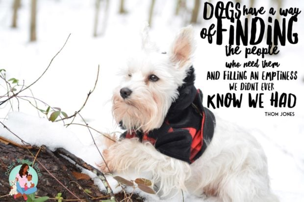 """""""Dogs have a way of finding the people who need them and filling an emptiness we didn't ever know we had."""" - ComeWagAlong.com"""