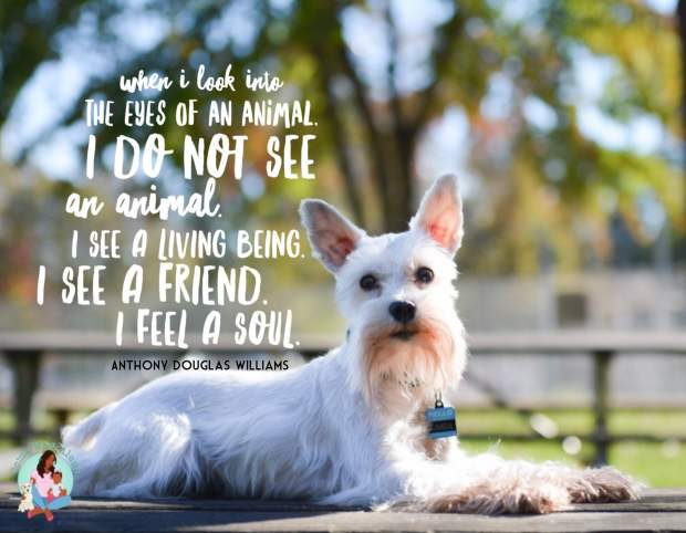 """When I look into the eyes of an animal, I do not see an animal. I see a living being. I see a friend. I feel a soul."" - ComeWagAlong.com"
