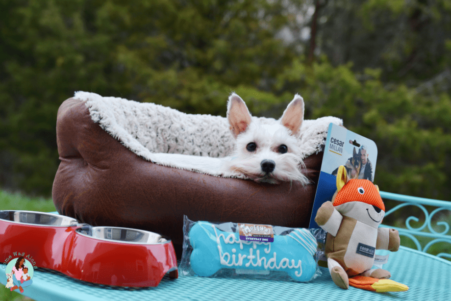 My Dog's 5th Birthday! - ComeWagAlong.com