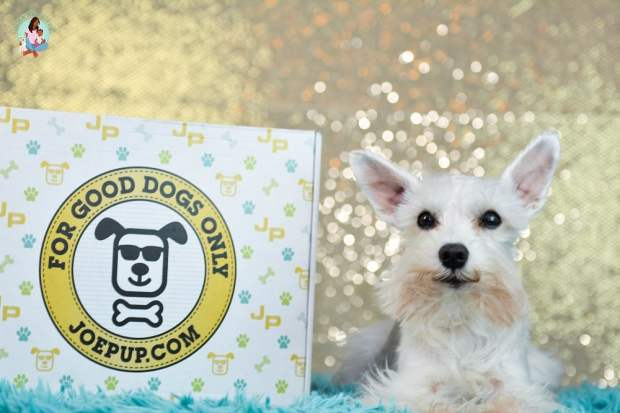 Surprise your Dog with Joe Pup + Unboxing & Coupon Code
