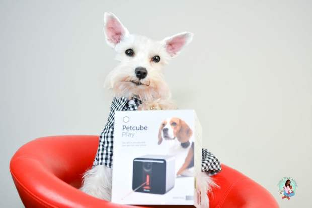 Check in on Your Pet with Petcube Play
