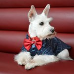 Dressing Up My Dog for the BlogPaws Conference!