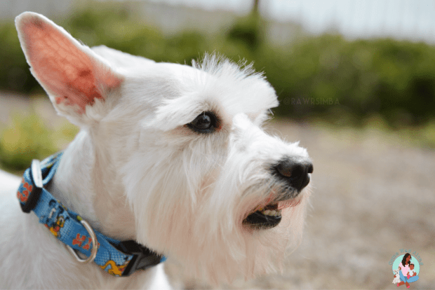 Summer Tips for Dog Owners