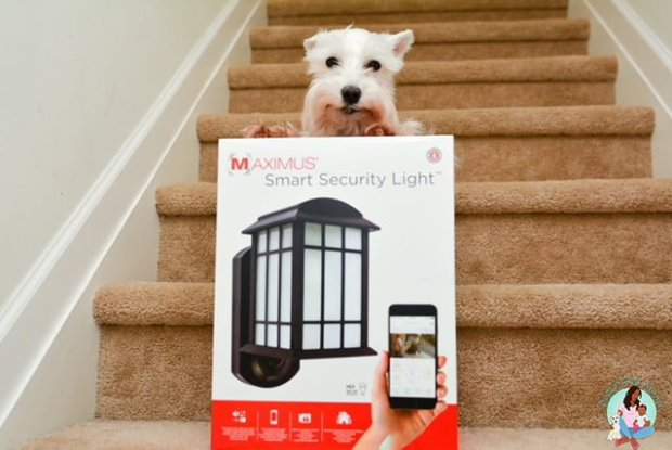 Maximus Smart Security Light - Watch Pets