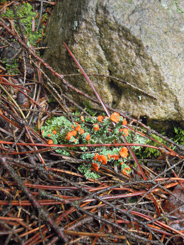 Peeks of bright orange lichen flowers with some frosty green amongst a field of neutral colors.