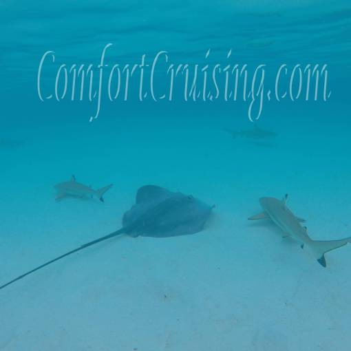 Four Black Tip Reef Sharks and One Sting Ray