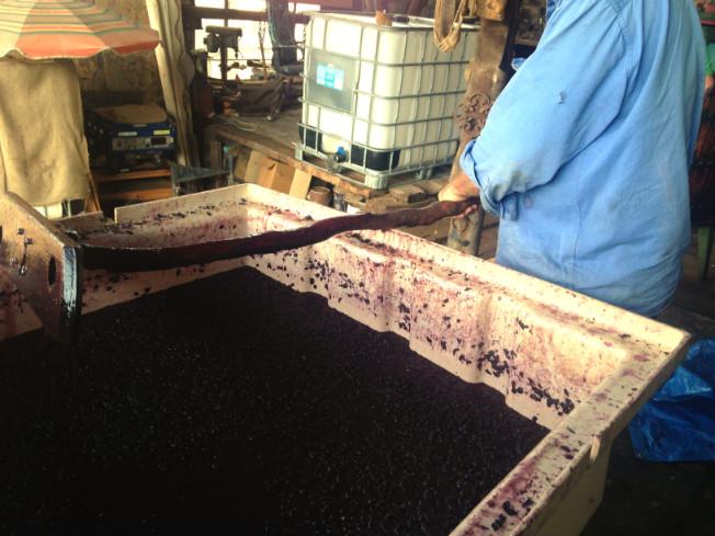 wine making 01