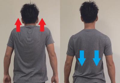 肩をすくめる姿勢 肩甲骨下げる力
