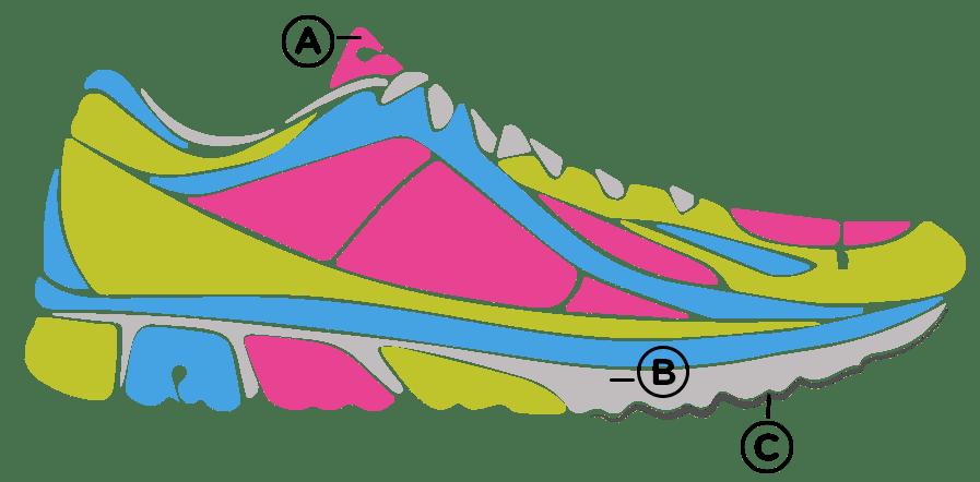 anatomy running shoe