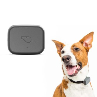 Dog accessories- Whistle GPS Pet Tracker & Activity Monitor