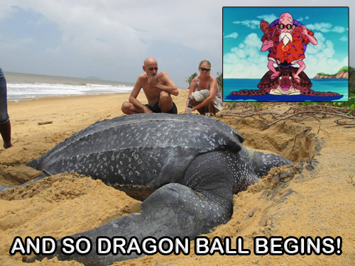 Dragon Ball Turtle Meme