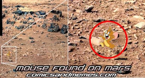 mouse found on mars meme