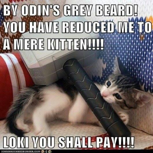 kitty thor meme