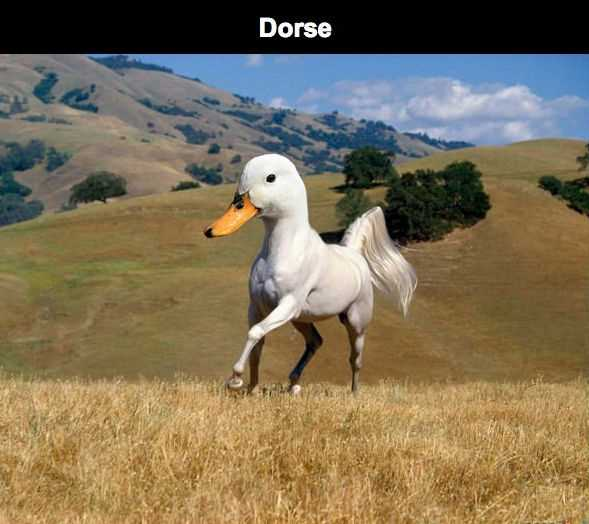 duck horse dorse meme