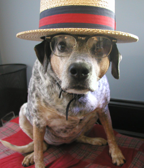Dog dressed as R. Crumb