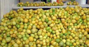 Limones Solidarios Novales