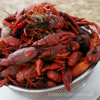 Como se Preparan los Langostinos – Crawfish – Comiendo Rico – Video