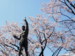桜(立石さくら通り)