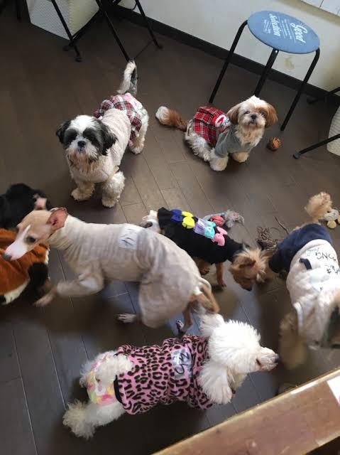保護犬カフェ 西八王子店