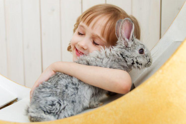 rabbit-8