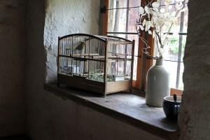 tarot, tarot reading, tarot spread, cages or wings, tarot product, tarot live
