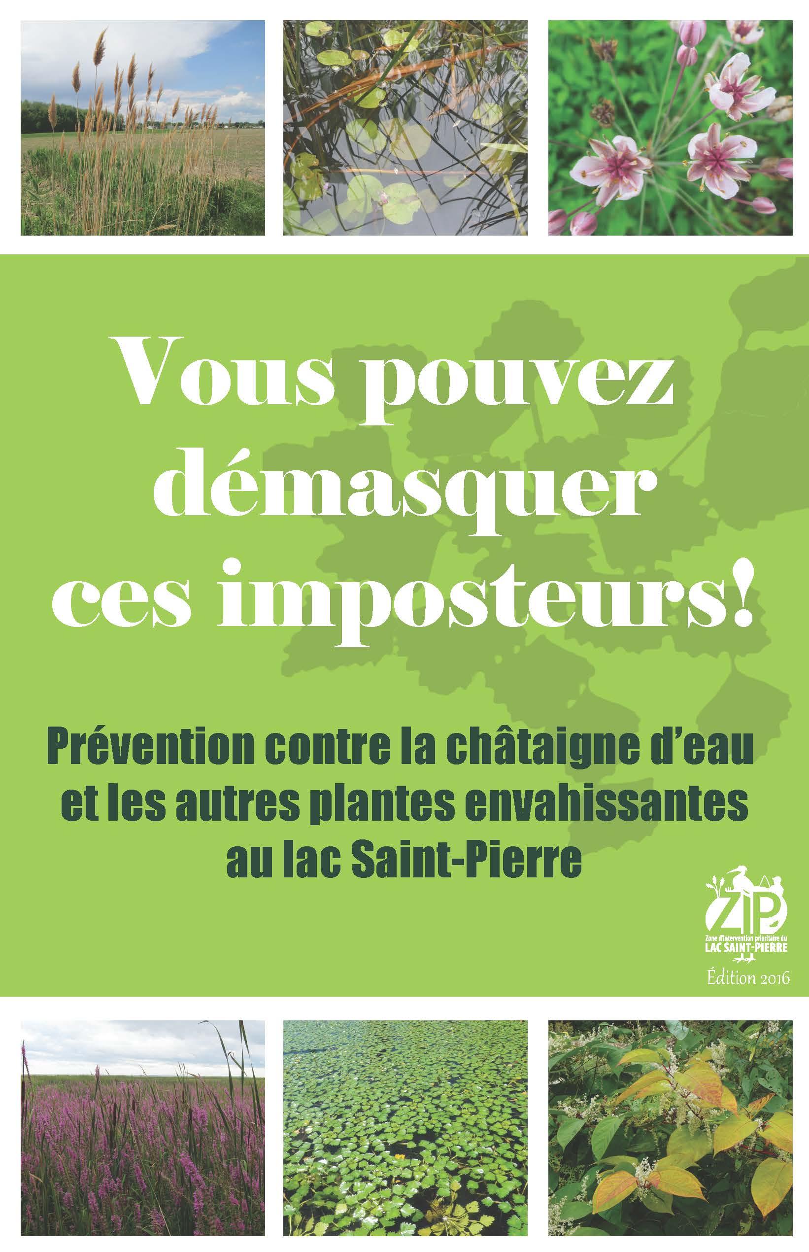 Un suivi qui porte ses fruits : aucune châtaigne d'eau au lac Saint-Pierre