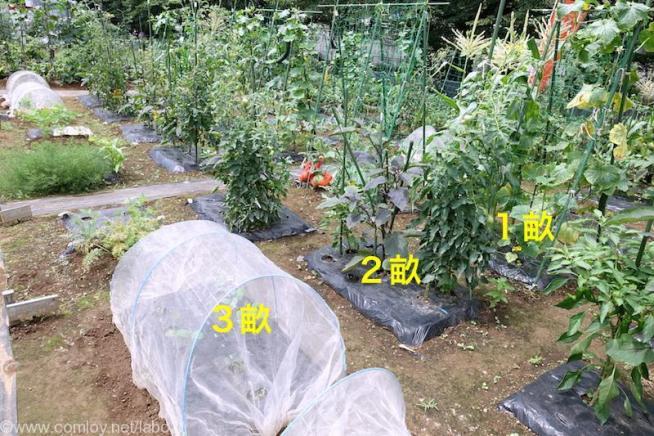 今日の畑200170702